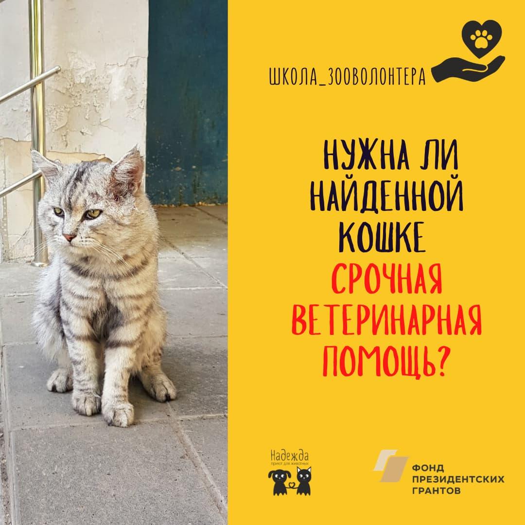 Нужна ли кошке срочная ветеринарная помощь