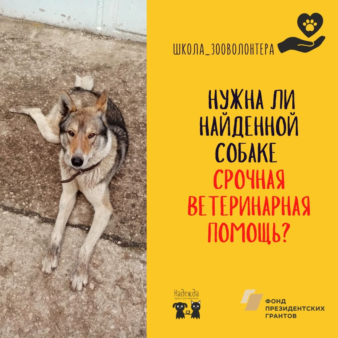 Нужна ли собаке срочная ветеринарная помощь