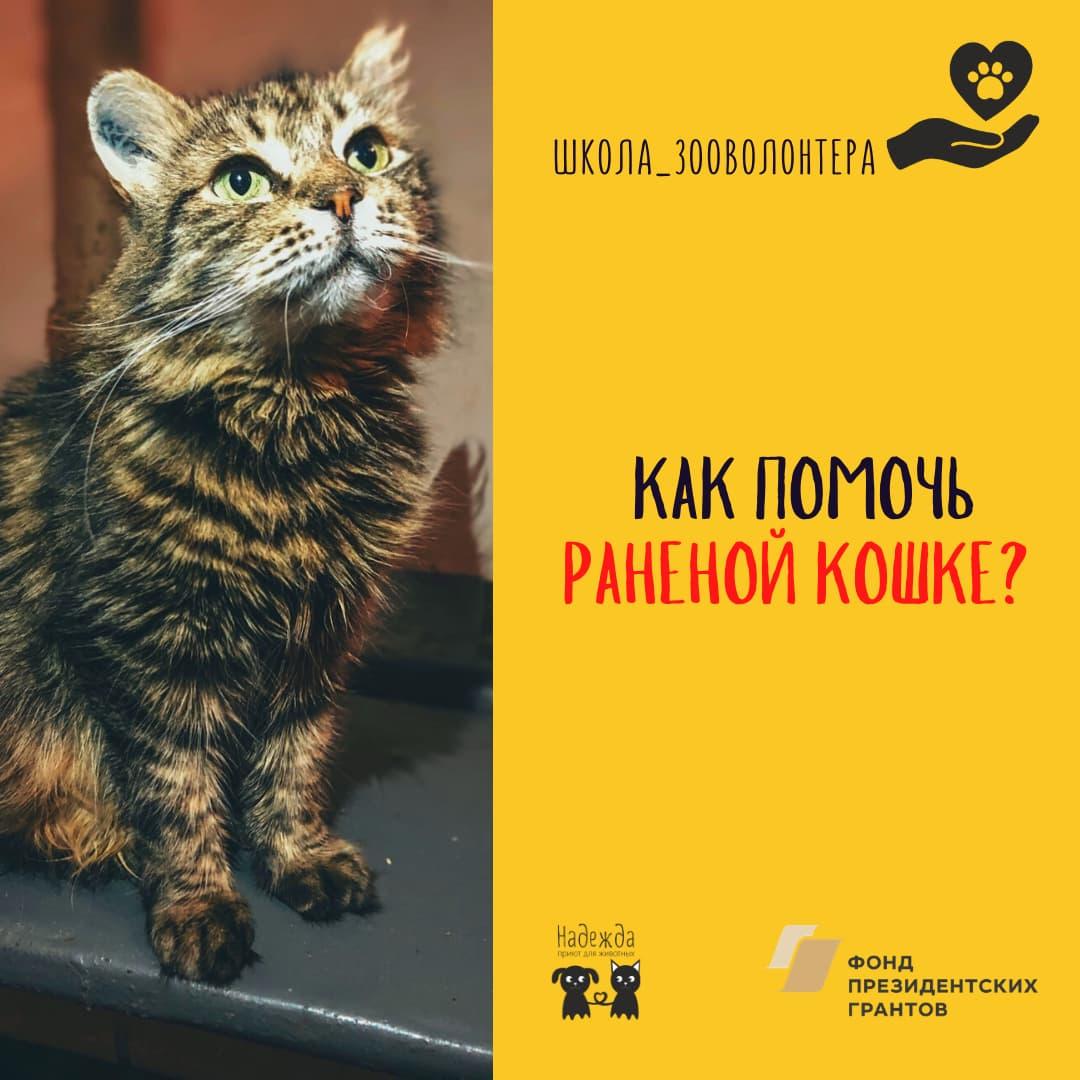 Pomoch Ranenoi Koshke