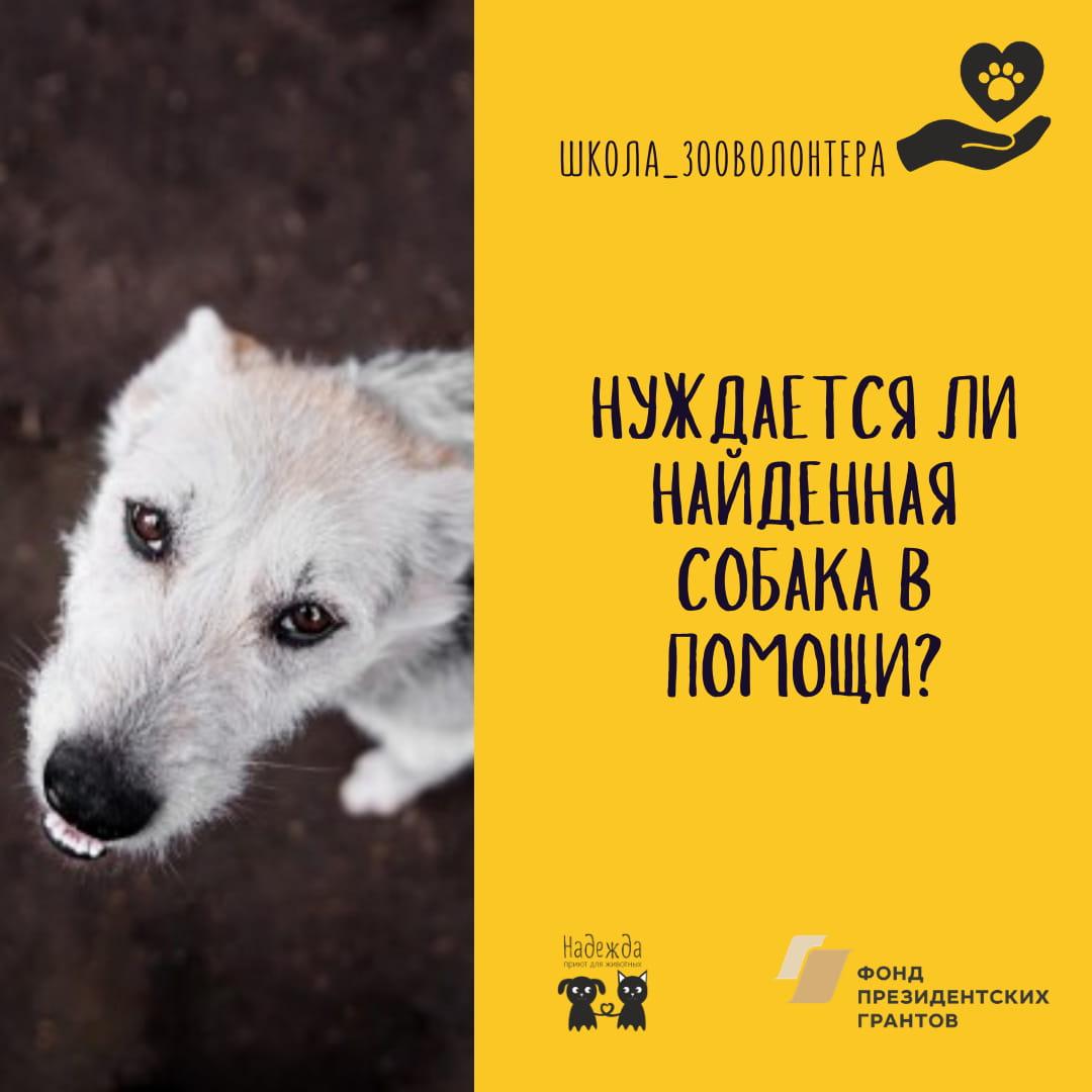Нуждается ли найденная собака в помощи